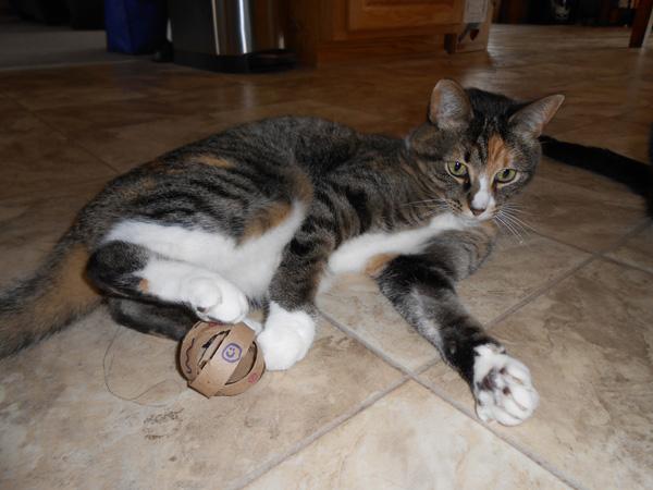 cat with cat toy