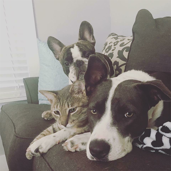 dogs and cat snuggling together