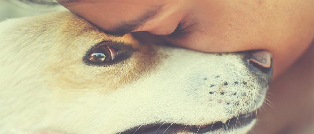 dog comforting woman