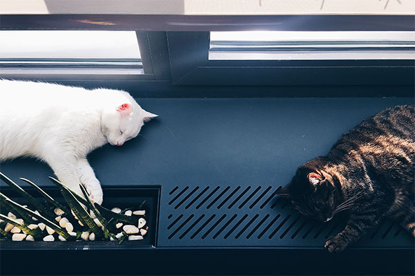 two cats sleeping by a window