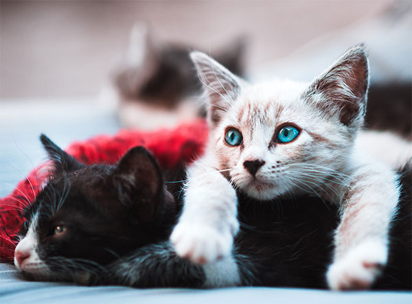 two kittens snuggling together