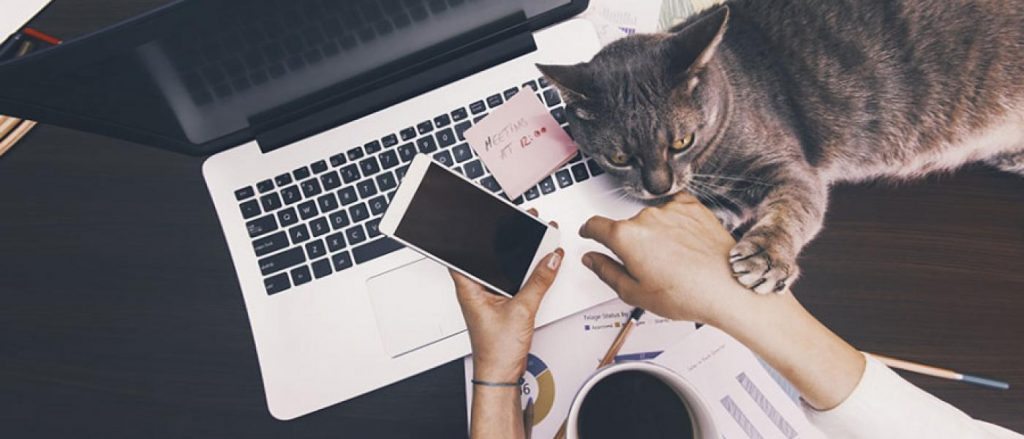 person working from home with cat